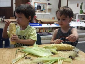 IHM Toddlers shucking and then eating corn on the cobb! A great summer practical life experience.???
