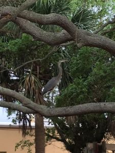 The 3-6 Playground had a special visitor this morning! They had a lesson on spring and why this Blue Heron was in the tree gathering sticks.💛