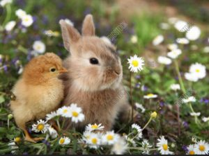 """Indian Harbour Montessori will be closed on Friday, April 19. School resumes Monday, April 22. Have a """"Hoppy"""" weekend! 🐇🐥💛"""